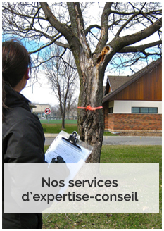 services-expertise-conseil