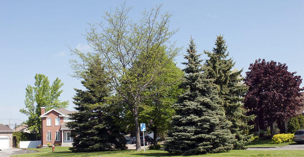S lectionner et planter la for t urbaine de demain - Plantation arbre en motte ...