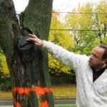SAE-Connaissance-arbre
